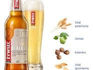 Piwo Żywiec