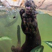 Sushi World Łódź został oficjalnym sponsorem wydr olbrzymich !